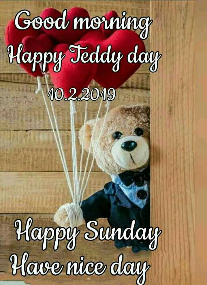 वाट्सएप स्टेटस - Good morning Happy Teddy day 10 . 2 . 2019 Happy Sunday - Have nice day - ShareChat
