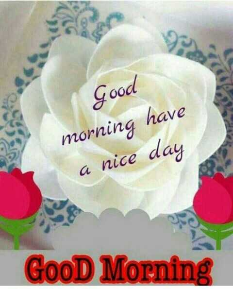 🌜शुभ संध्या - Good morning have a nice day GooD Morning - ShareChat