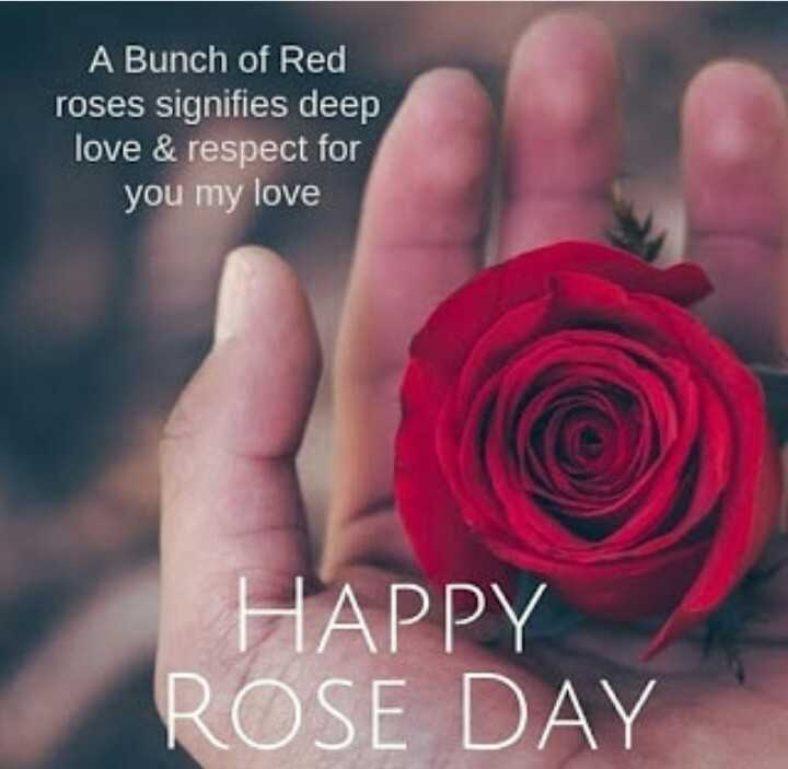 🌹हैप्पी रोज डे🌹 - A Bunch of Red roses signifies deep love & respect for you my love HAPPY ROSE DAY - ShareChat