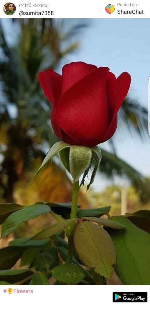 ফুল - পােস্ট করেছে : @ sumita 7358 Posted on : ShareChat # Flowers GET IT ON Google Play - ShareChat