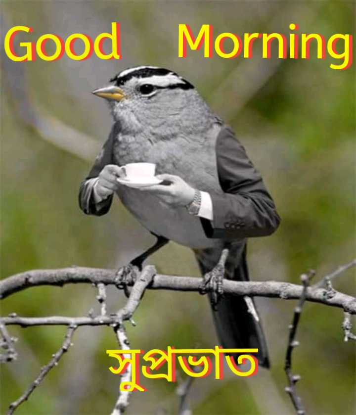 🌞সুপ্রভাত - Good Morning সুপ্রভাত  - ShareChat