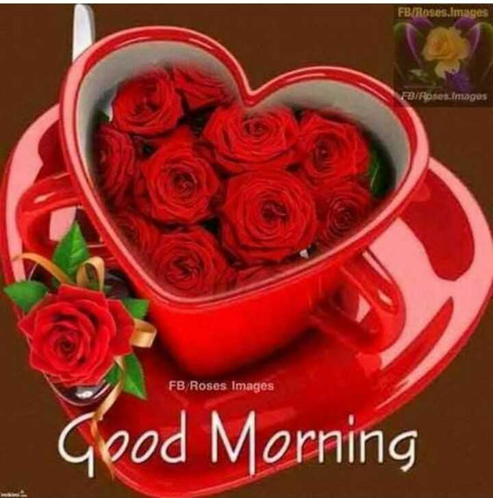 🌅 ਗੁੱਡ ਮੋਰਨਿੰਗ - FB Roses . Images FB / Roses Images FB Roses Images Good Morning - ShareChat