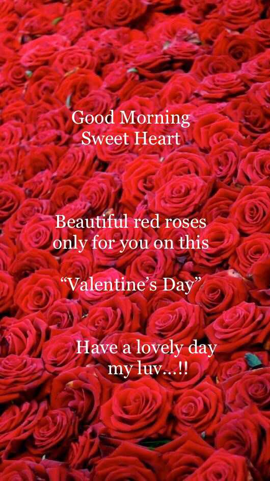 💖 હેપી વેલેન્ટાઇન ડે - Good Morning Sweet Heart Beautiful red roses only for you on this Valentine ' s Day Have a lovely day my luv . . . ! ! - ShareChat