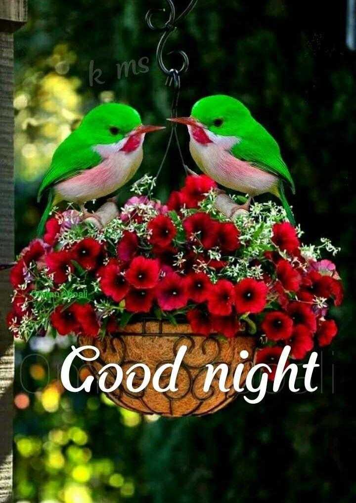 🌛ଶୁଭରାତ୍ରୀ - o k ms 6 Wan A boali Cood night - ShareChat