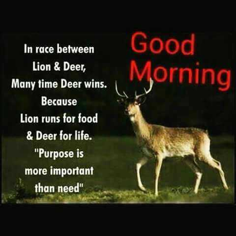🌞ସୁପ୍ରଭାତ - Good Lion & Deer . . . Morning In race between Lion & Deer , Many time Deer wins . Because Lion runs for food & Deer for life . Purpose is more important than need  - ShareChat