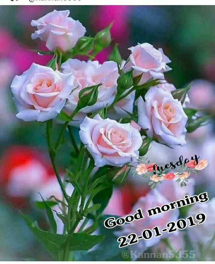 🌞ସୁପ୍ରଭାତ - puesday Good morning 22 - 01 - 2019 @ Kannan5355  - ShareChat