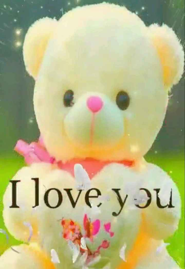 టెడ్డి - I love you - ShareChat