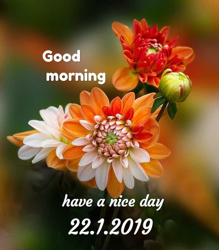 🌅శుభోదయం - Good morning have a nice day 22 . 1 . 2019  - ShareChat