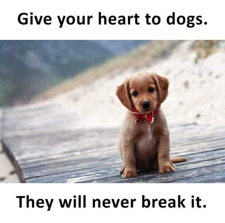 ❤️ లవ్ - Give your heart to dogs . They will never break it . - ShareChat