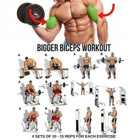 🏋️‍♂️जिम फोटोग्राफी - BIGGER BICEPS WORKOUT 4 SETS OF 10 - 15 REPS FOR EACH EXERCISE - ShareChat