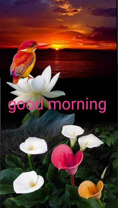 🌞Good Morning🌞 - god morning - ShareChat