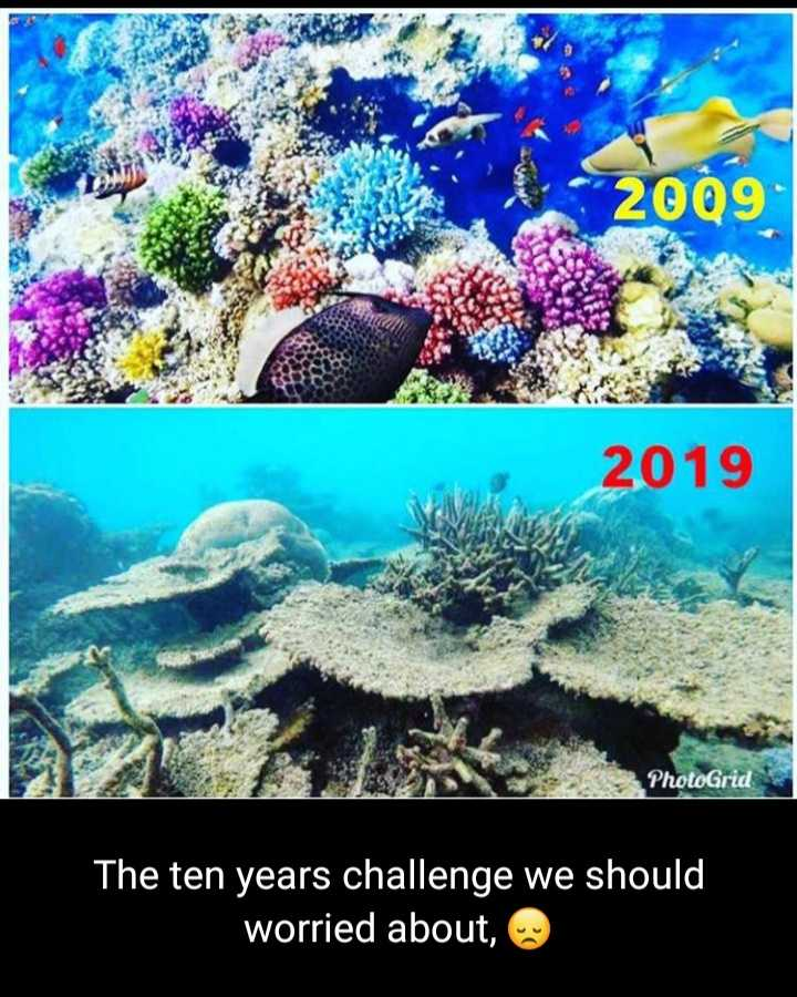 10yearschallange - 2009 2019 PhotoGrid The ten years challenge we should worried about , - ShareChat