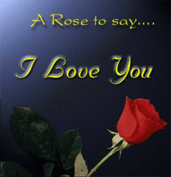 love.... - A Rose to say . . . . I Love You - ShareChat