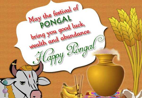 मेमोरी विथ टीचर्स - May the festival of PONGAL bring you good luck , wealth and abundance . Happy Pongal - ShareChat