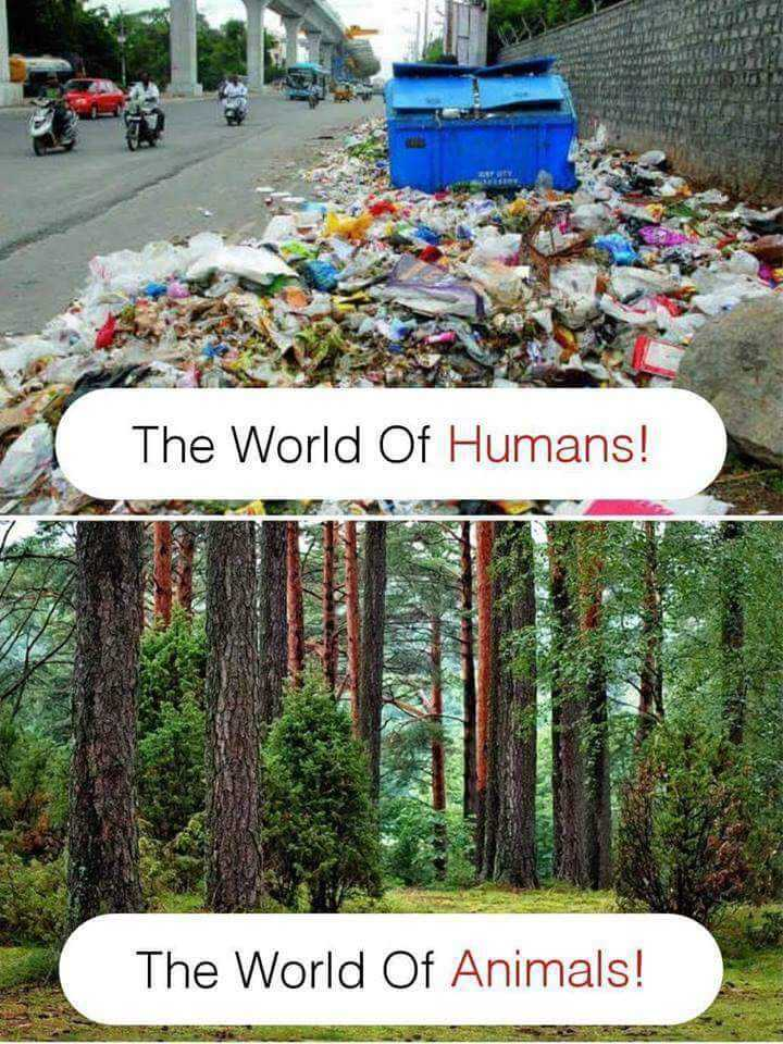 विश्व पर्यावरण दिवस - The World Of Humans ! The World Of Animals !  - ShareChat