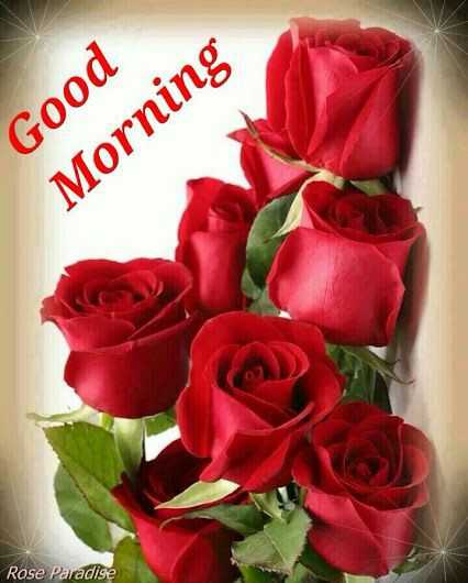 💐Flower photography - Good Morning Rose Paradise - ShareChat