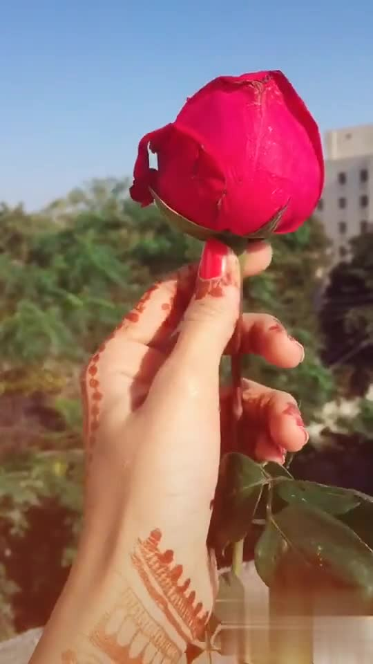 rose 🌹 day - ShareChat