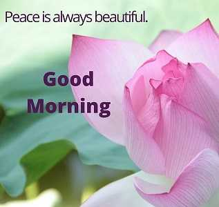 my upload pick s - Peace is always beautiful . Good Morning - ShareChat