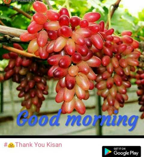 🙏Thank You Kisan - Cood morning # 30 Thank You Kisan GET IT ON Google Play - ShareChat