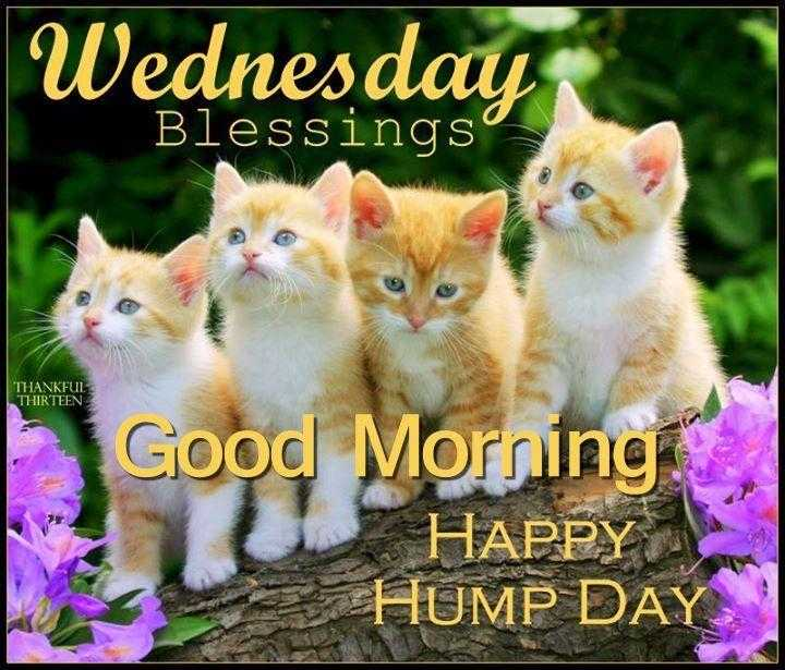💐 શુભ બુધવાર 💐 - Wednesday Blessings THANKFUL THIRTEEN Good Morning HAPPY HUMP DAY - ShareChat