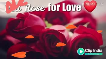 💑वैलेंटाइन वीडियो📹 - Made with KINEMASTER white Rose cace India Download the app Made with KINEMASTER India Download the app - ShareChat
