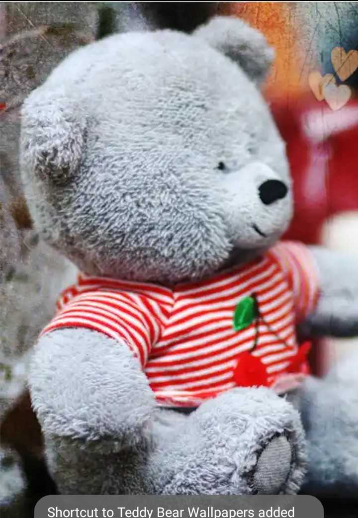 teddy bears - Shortcut to Teddy Bear Wallpapers added - ShareChat