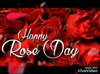 🌹 7 Feb - Rose Day - fact Red roses are one of the most universal symbols of love throughout the world ; they say I love you in every language . Made With Viva Video Har Rose Day Made With VivaVideo - ShareChat