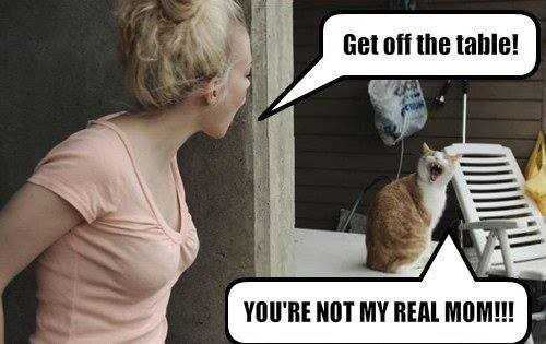 animals - Get off the table ! YOU ' RE NOT MY REAL MOM ! ! ! - ShareChat