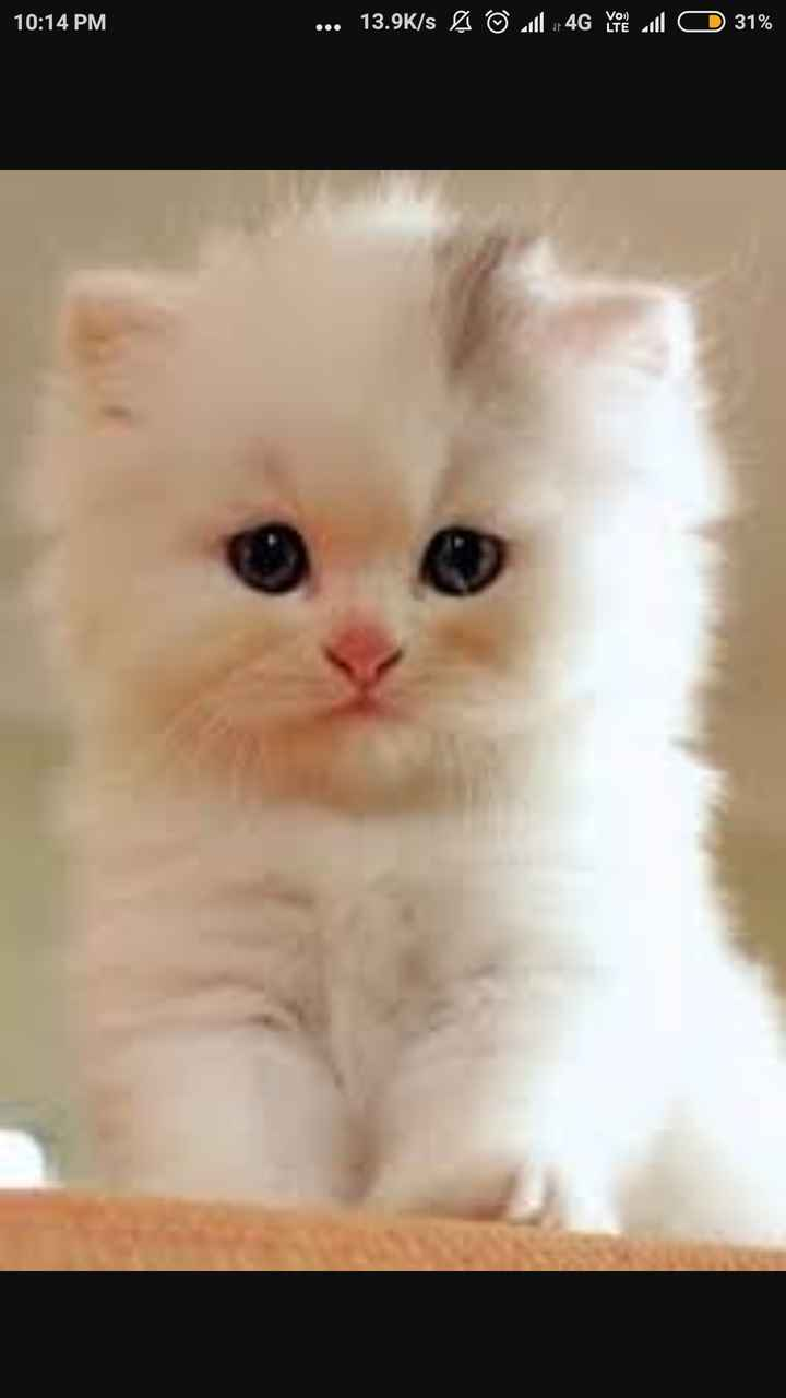 cat lover🐈 - 10 : 14 PM . . . 13 . 9K / s © Jul 4G you will 31 % - ShareChat