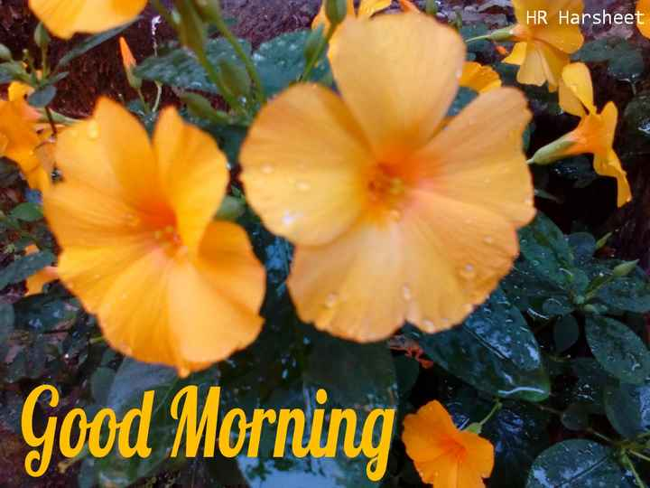 have a nice day...✍🌷🌷 - HR Harsheet Good Morning - ShareChat
