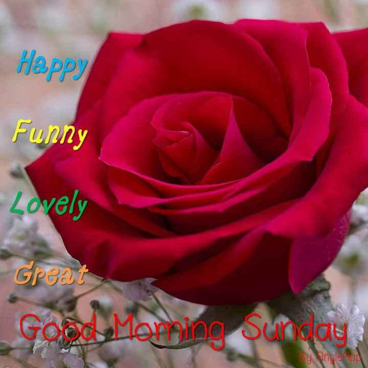 Good_morning - Happy Funny - Lovely Great Good Morning Sunday By Angle App - ShareChat