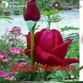 🌞ସୁପ୍ରଭାତ - ren2B05 posted on ShareChat Zeniou Video @ dhiren2805 Pored on Sharechal DE  - ShareChat