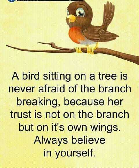 believe in yourself - A bird sitting on a tree is never afraid of the branch breaking , because her trust is not on the branch but on it ' s own wings . Always believe in yourself . - ShareChat