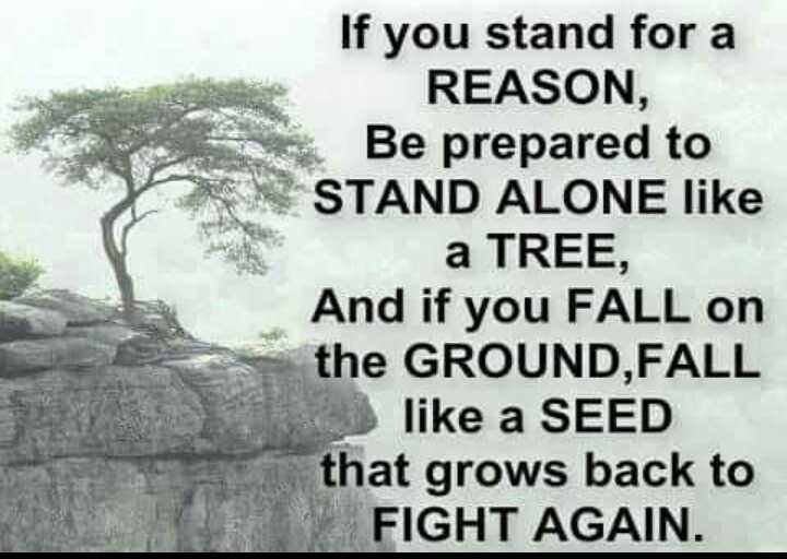 my thinking - If you stand for a REASON , Be prepared to STAND ALONE like a TREE , And if you FALL on the GROUND , FALL like a SEED that grows back to FIGHT AGAIN . - ShareChat