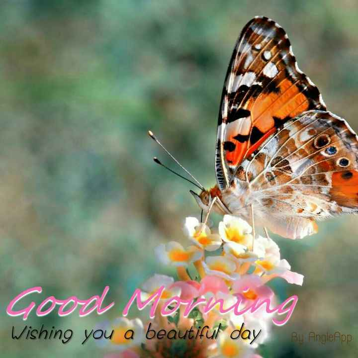 Good morning - Good Wishing you a beautiful day Bu AngleApp - ShareChat
