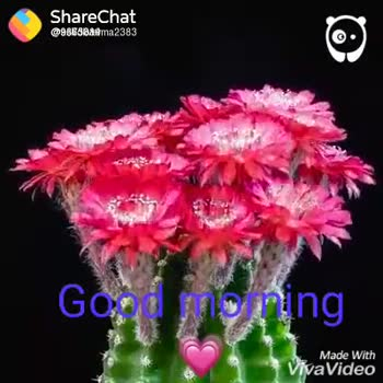😁 Share a Smile - ShareChat @ 96658 & ma2383 sood morning Made With VivaVideo ShareChat MESSAGE US ON VIDEO @ BOREDPANDA . COM MESSAGE US . COM Good morning Vivajalec - ShareChat
