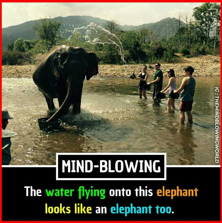 😏 रोचक तथ्य - IG : THEMINDBLOWINGWORLD MIND - BLOWING The water flying onto this elephant looks like an elephant too . - ShareChat