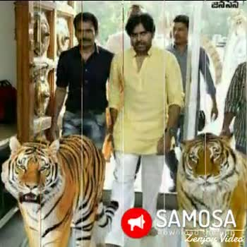 power 🌟 pawan kalyan - SAMOSA SonNviden Zeny Video SAMOSA Zenjoy Video - ShareChat