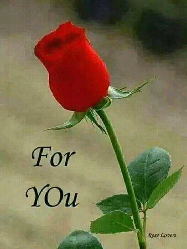 only for you - For YOU Rose Covers - ShareChat