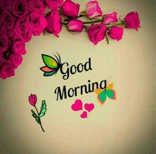 🥀🌹Good morning🌹🥀 - good Morning - ShareChat