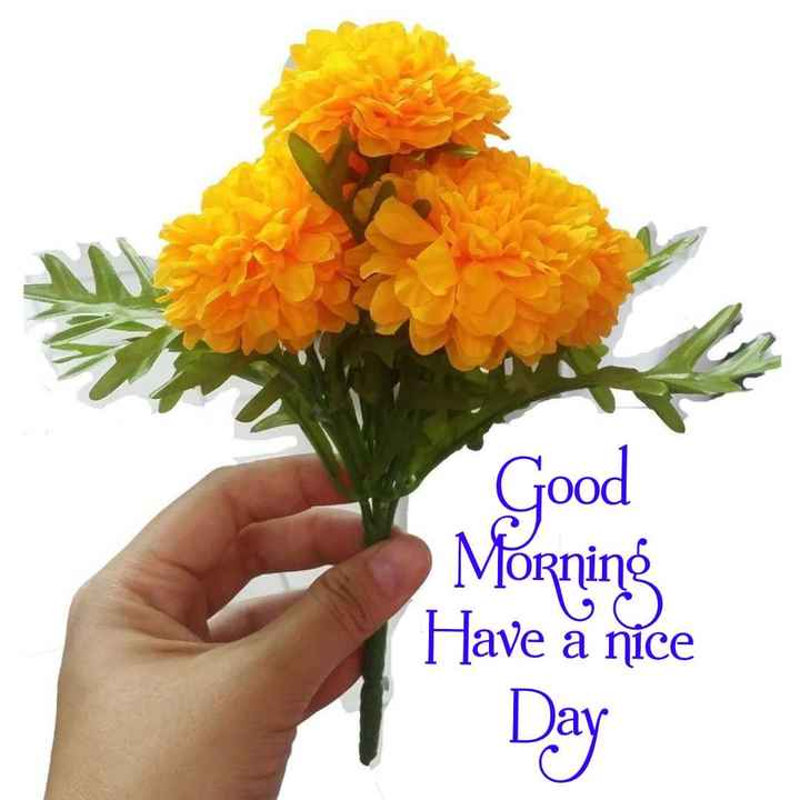 jasvir kaur chumber - Good Morning Have a nice - ShareChat