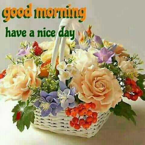 Good Morning - have a nice day - ShareChat