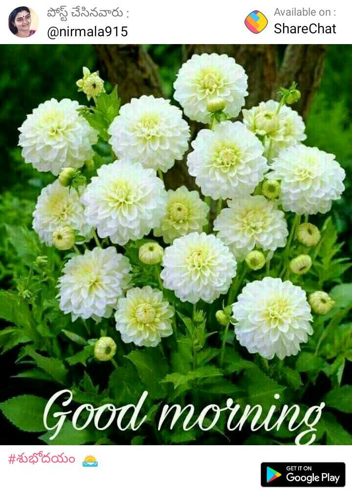 good morning - పోస్ట్ చేసినవారు : @ nirmala915 Available on : ShareChat Good morning # *