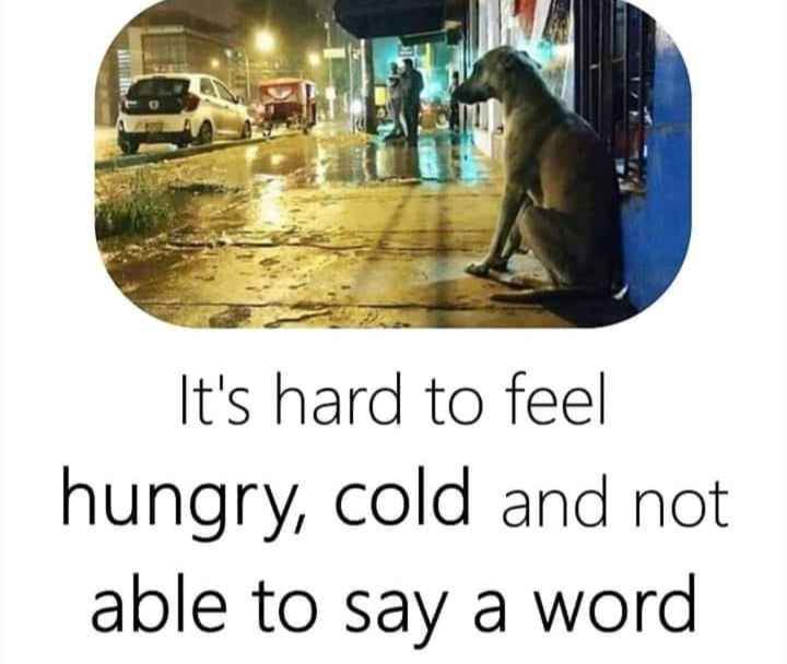 english thoughts - It ' s hard to feel hungry , cold and not able to say a word - ShareChat