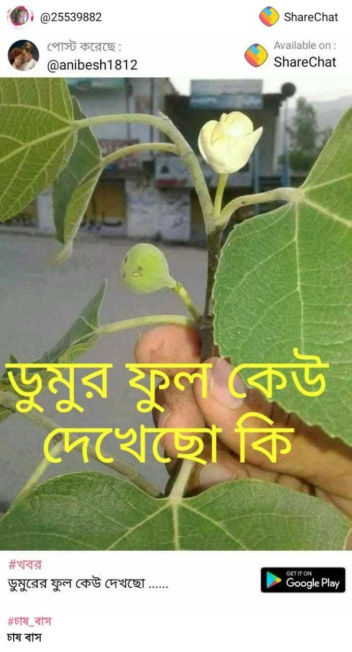 ক্রিস_গেইল - @25539882 ShareChat Available on: @anibesh1812 TCRC GET IT ON CF 박 て 可 ....。. Google Play 丽 77 - ShareChat