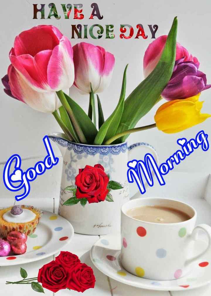 🌞Good Morning🌞 - HAVE A NICE DAY Morning - ShareChat