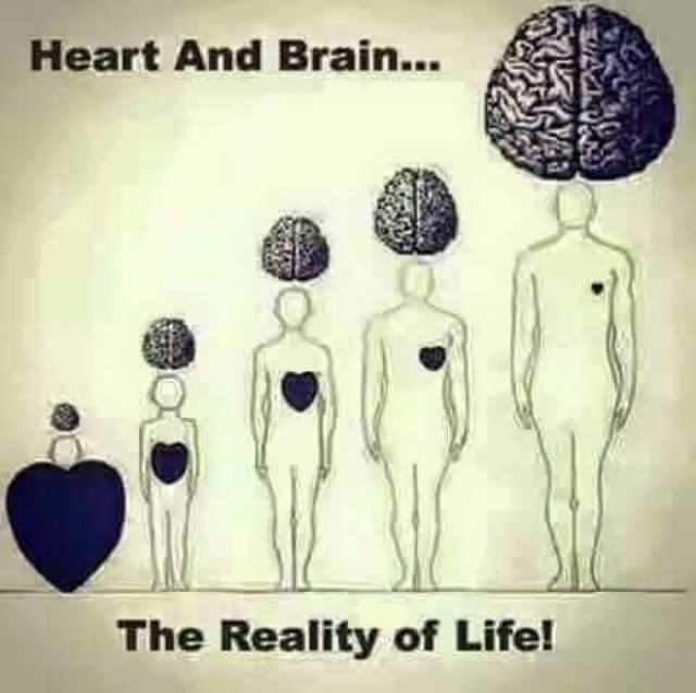 ಕಾರ್ತಿಕ ಮಾಸ - Heart And Brain . . . The Reality of Life ! - ShareChat