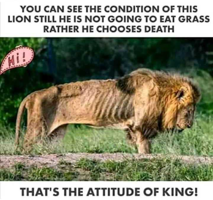 lyrics - YOU CAN SEE THE CONDITION OF THIS LION STILL HE IS NOT GOING TO EAT GRASS RATHER HE CHOOSES DEATH THAT ' S THE ATTITUDE OF KING ! - ShareChat