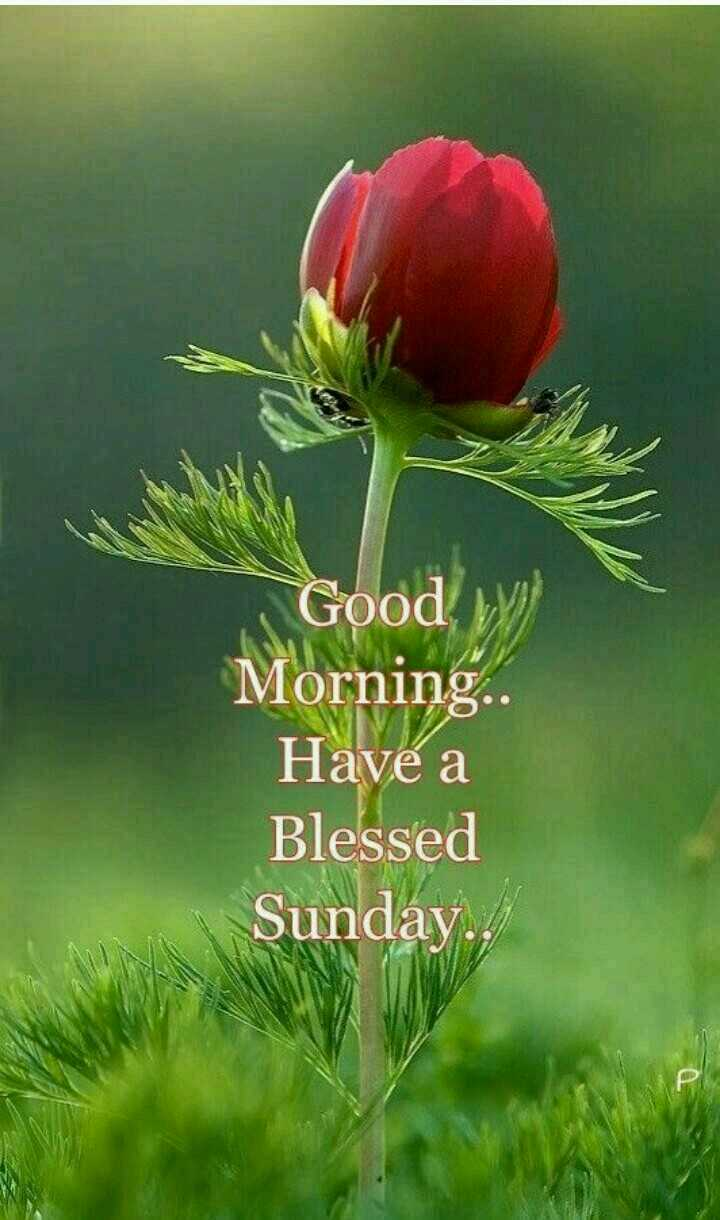 happy Sunday - 1 Good W ) Morning . Have a Blessed Sunday . - ShareChat