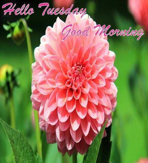अलविदा 2018 - Hello Tuesday Good Morning - ShareChat